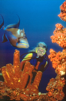 Vele gehandicapten vakanties binnen en buiten de EU | Aruba_underwat-diving.jpg | Vele gehandicapten vakanties binnen en buiten de EU