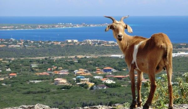 Vele gehandicapten vakanties binnen en buiten de EU | 600×350-Bonaire-overzicht.jpg | Vele gehandicapten vakanties binnen en buiten de EU