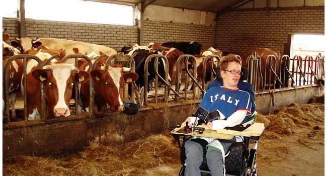 Vele gehandicapten vakanties binnen en buiten de EU | 650×350-kaag-koeien-rolstoel.jpg | Vele gehandicapten vakanties binnen en buiten de EU