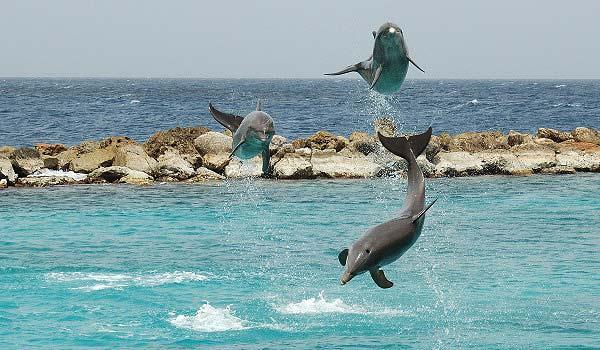 Vele gehandicapten vakanties binnen en buiten de EU | 600×350-Curaçao_Sea_Aquarium_Dolphin_Show.jpg | Vele gehandicapten vakanties binnen en buiten de EU